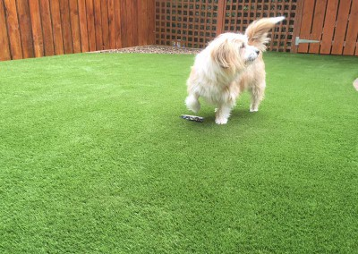 Artificial Grass is Pet Friendly