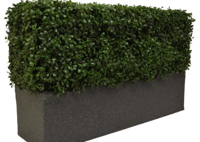 Boxwood Bespoke Planter A