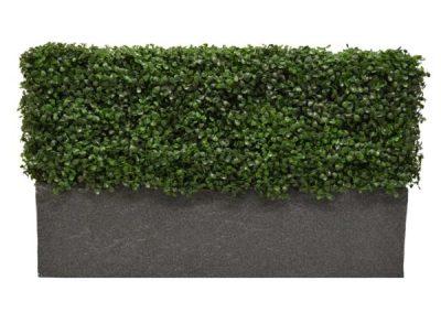 Buxus Bespoke Planter Side