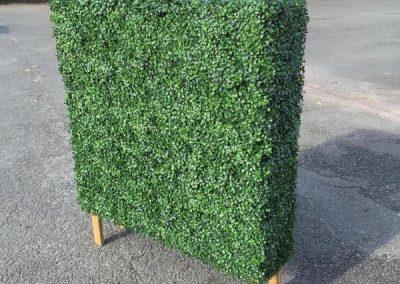 Buxus Hedge on Legs