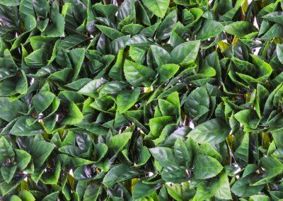 Gardenia Trellis