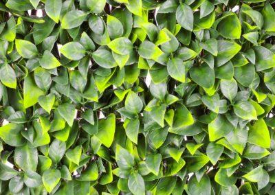 Orange Leaf Trellis