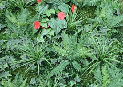 Shuttergrass with Anthurium